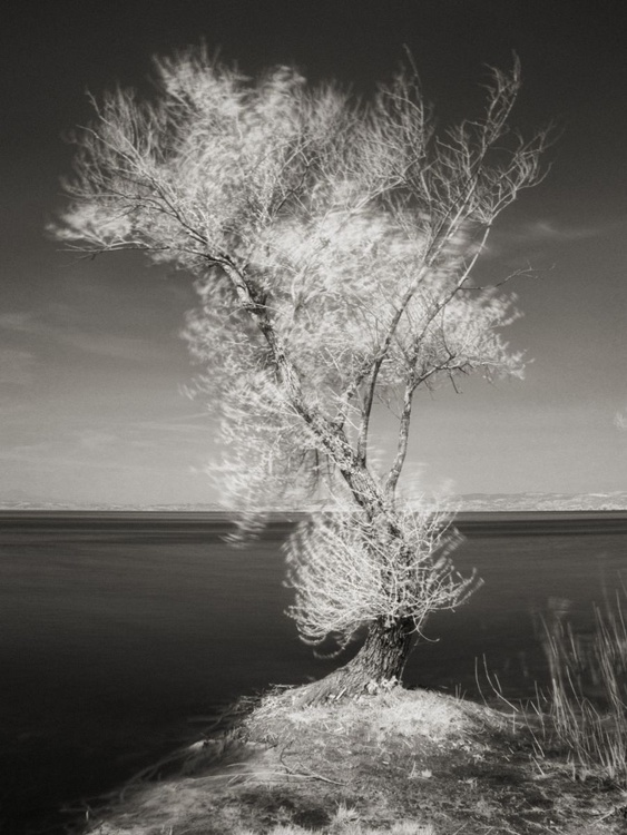 Tree on the lake - Image 0