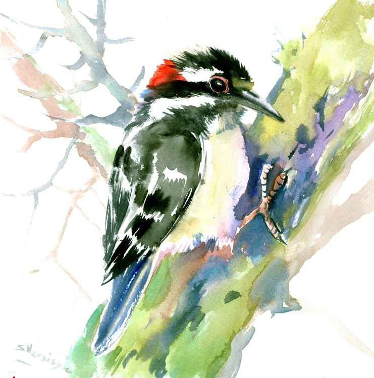 Downy Woodpecker -