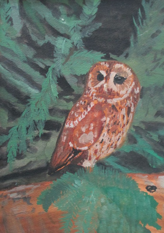 Lone Owl - Image 0