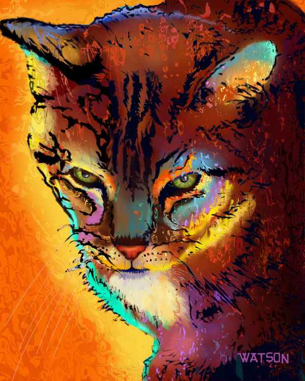 Colourful Tabby -
