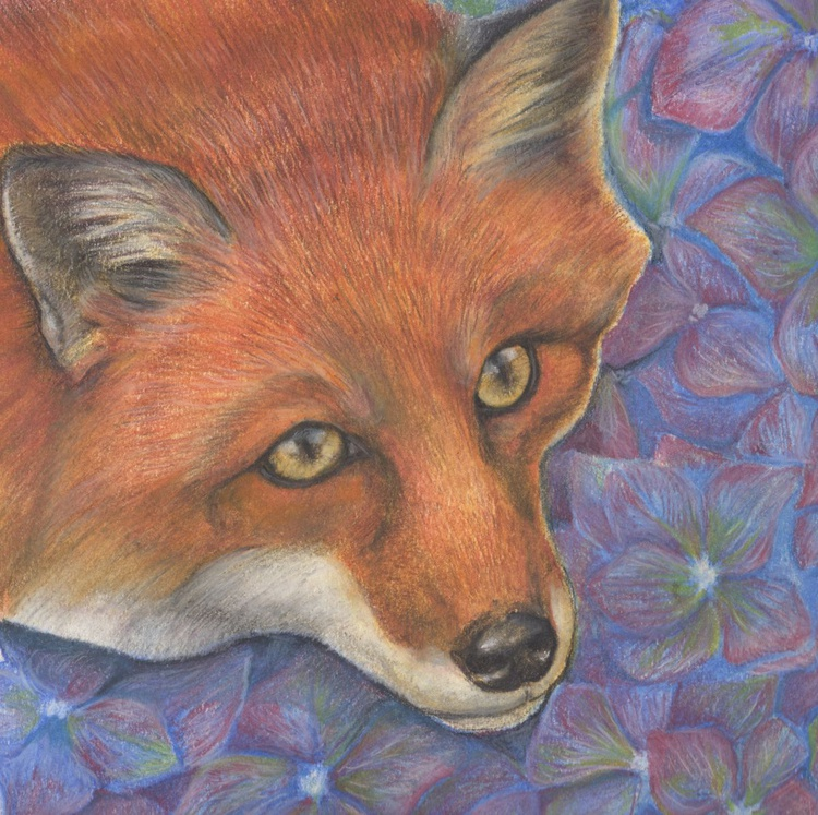 The Fox and the Hydrangea - Image 0