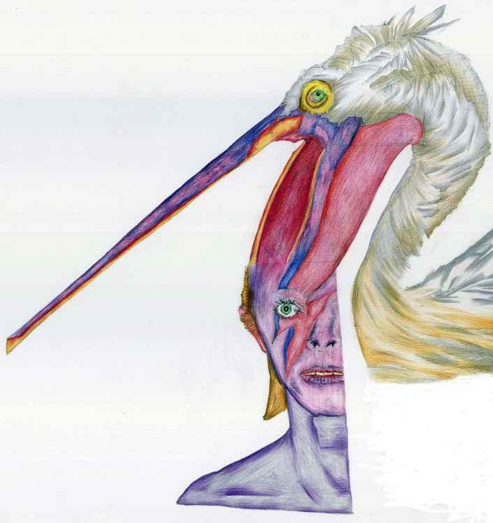 Pelican Pretty