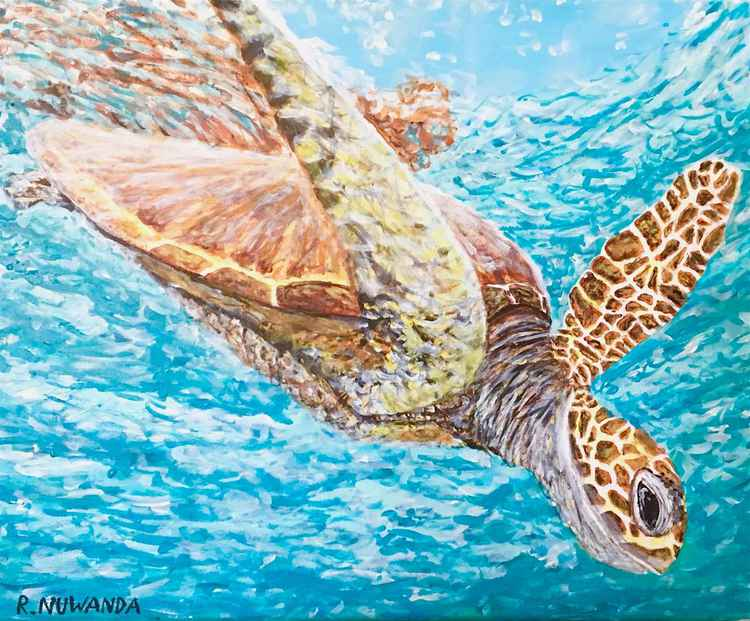 Diving Turtle -