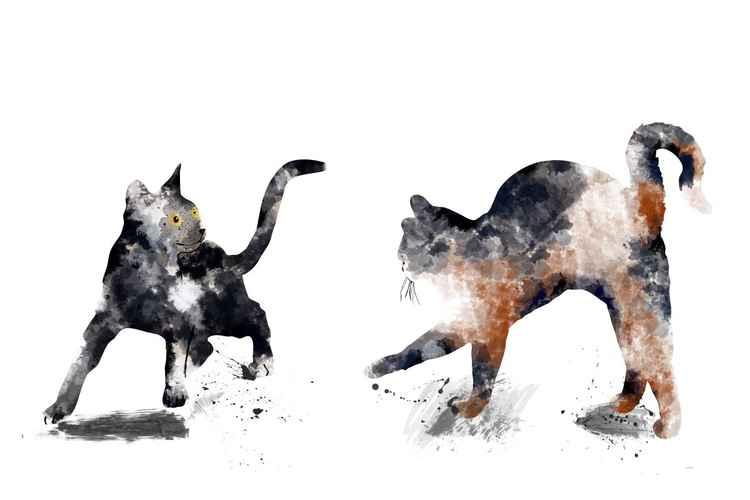 2 Cats 3