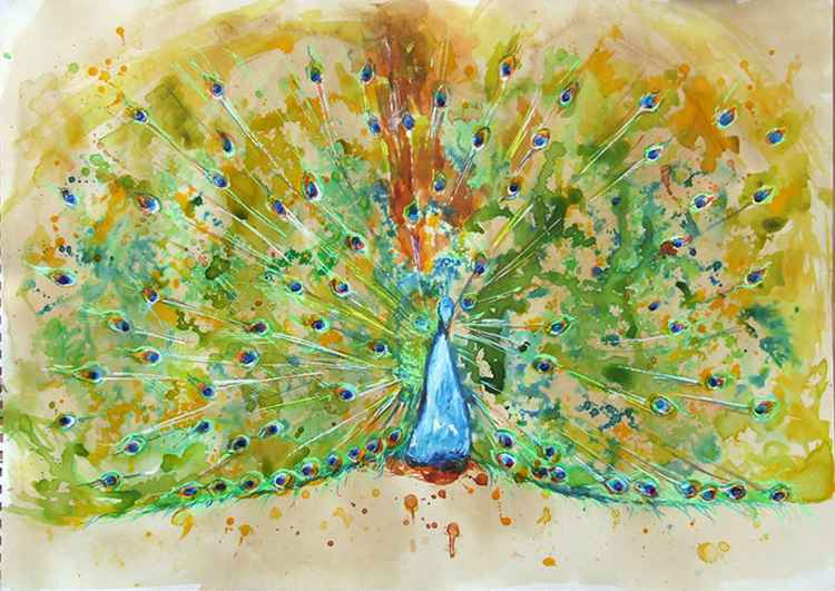 Peacock I / Watercolour -