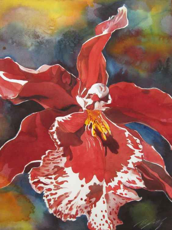 Red Oncidium orchid -
