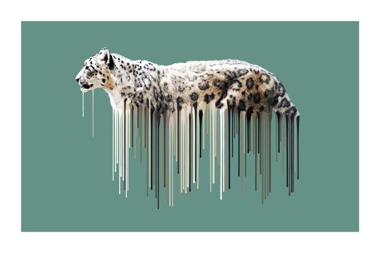 Snow Leopard - Sage - Image 0
