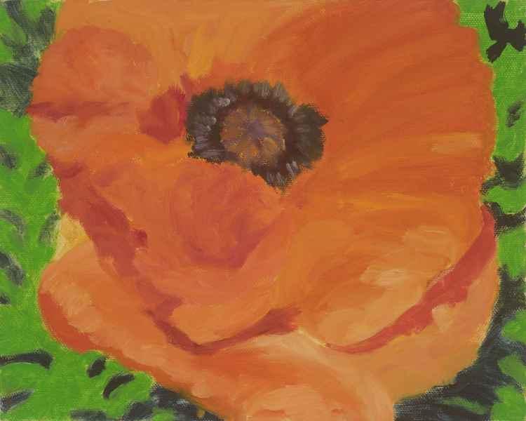 Portrait of a Poppy -