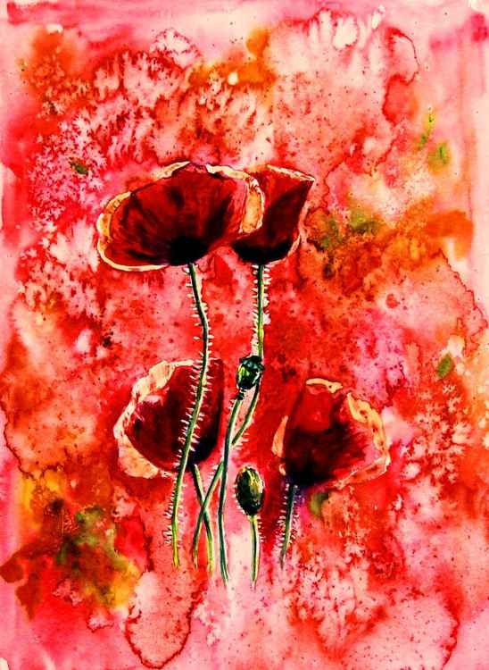 Red poppies -