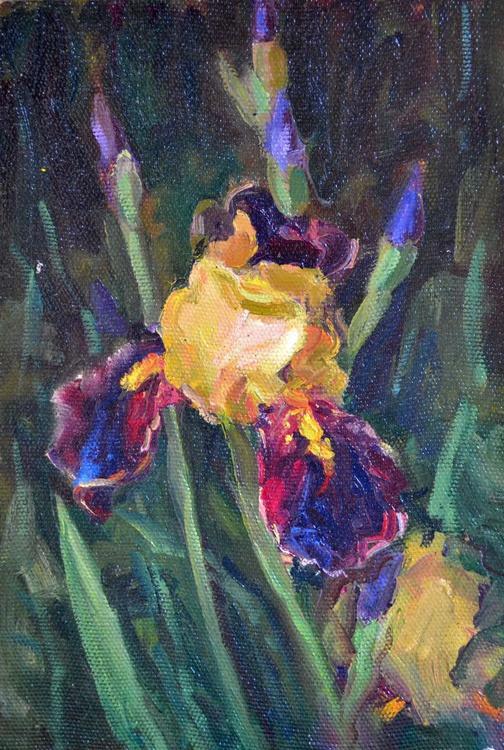 The iris flower - Image 0