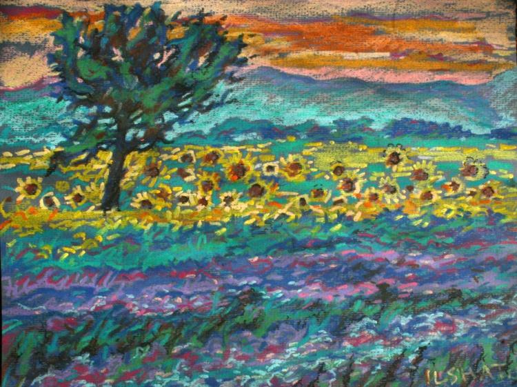 Sunflowers. - Image 0