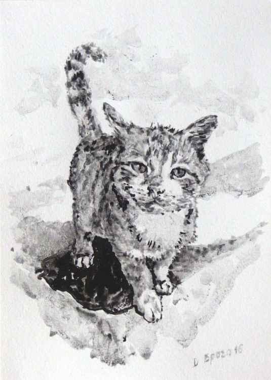 Cat 03 -