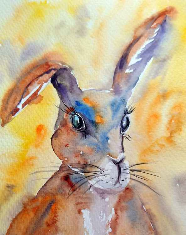 Rabbit in colour