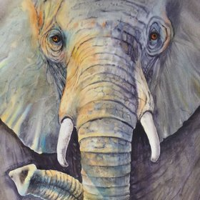"""Majestic  - Elephant Painting - Elephant face close up - African wildlife art - Elephant watercolor, 2017"" by Olga Beliaeva Watercolours"