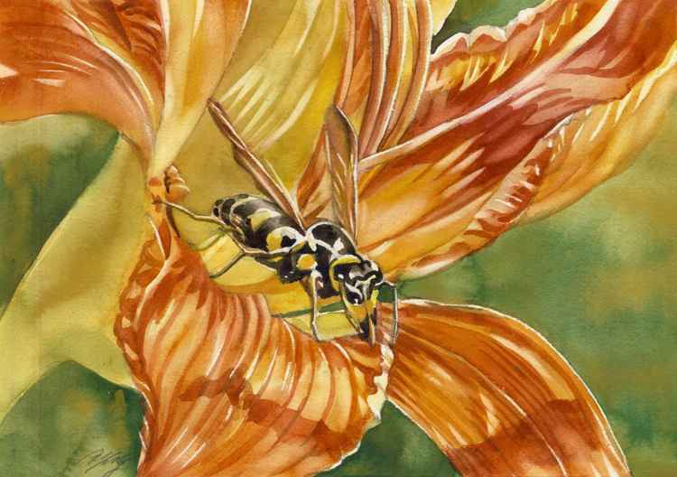 wasp in daylily -