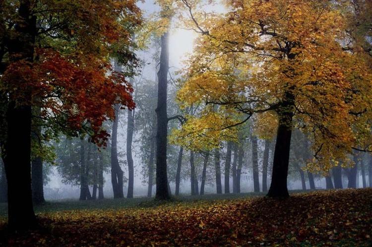 Autumn Blues - Image 0