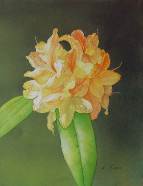 Orange Rhodie by Kathryn Ragan
