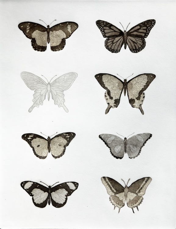 Lepidoptera, with golden paper - Image 0
