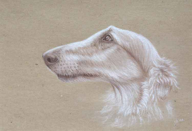 "Original pastel drawing ""Borzoi"""