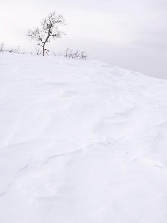 Solitude. (152x203cm) - Image 0