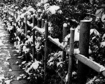 Duthie Park Snow Fence