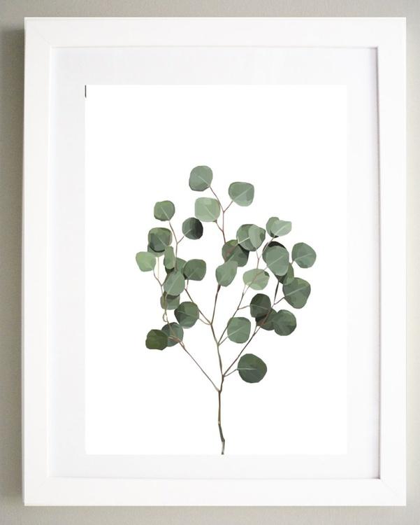 Silver Dollar Eucalyptus - Image 0