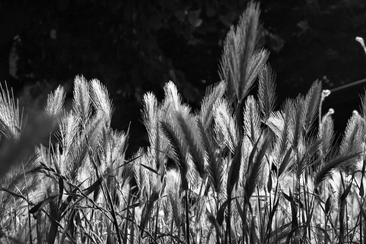 B/W Grass - Image 0