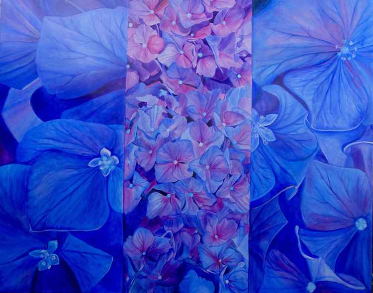 Three Hydrangeas -