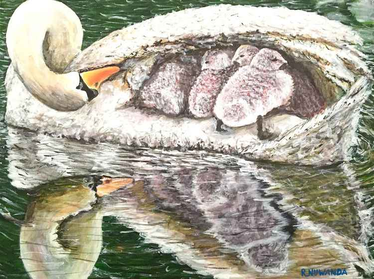 Mothering Swan