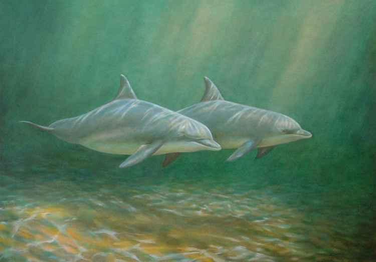 Sleeping Dolphins -