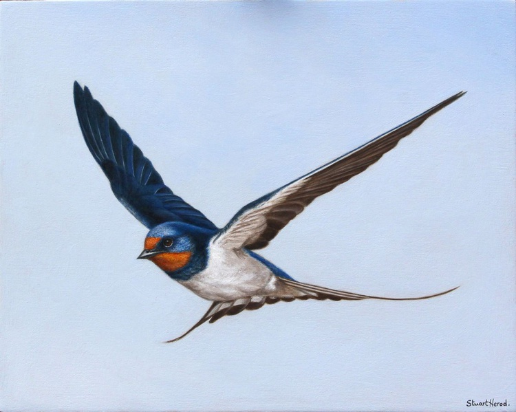 Flying Swallow - Image 0