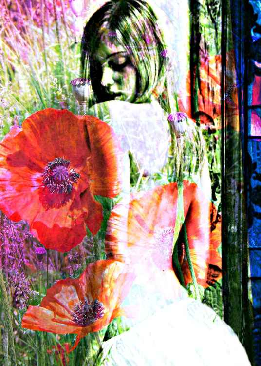 Poppy - Limited Edition Archival Print