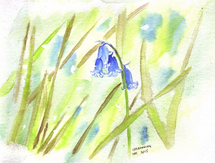 Lone Bluebell among the grasses - Image 0