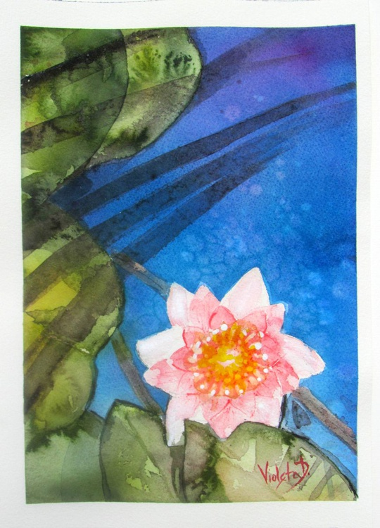 Waterlily 2 - Image 0
