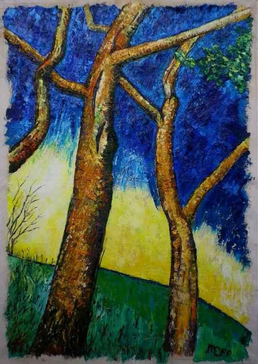 Ash tree trunks against a blue sky.