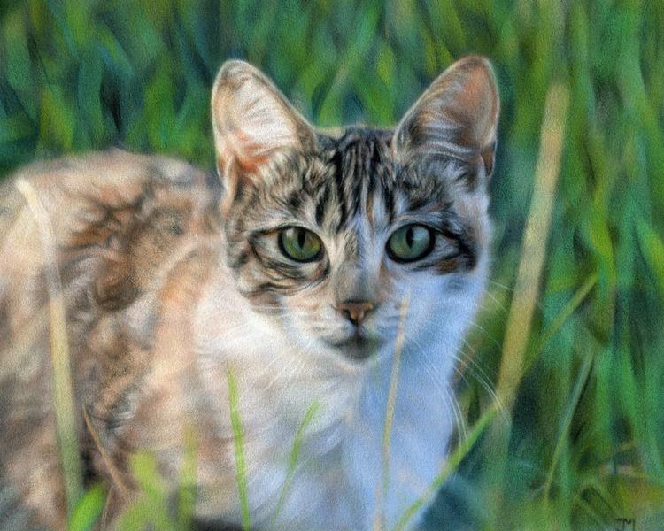 Cat I - Image 0