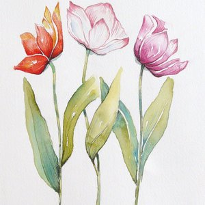 Tulips by Angela Rendall
