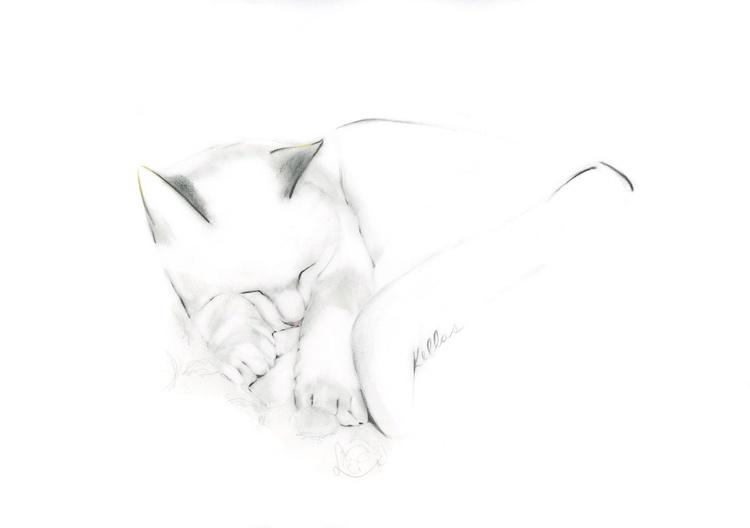 Graphite Drawing of an Edinburgh Cat - Image 0