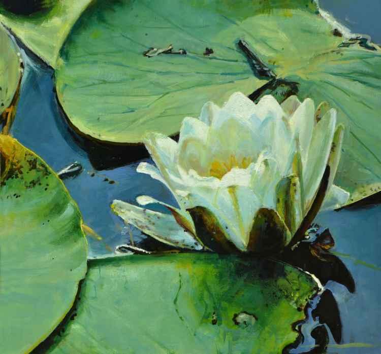 Waterlilies -