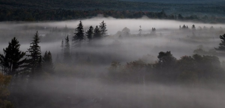 Morning Fog 6 - Image 0