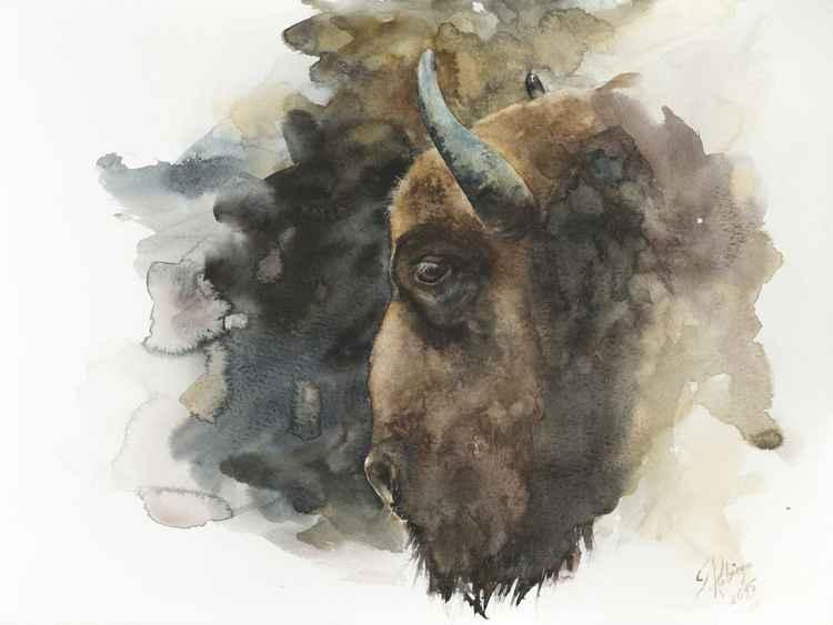 European bison (Bison bonasus) -
