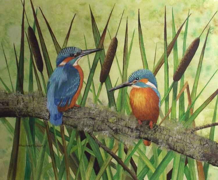 Kingfishers -