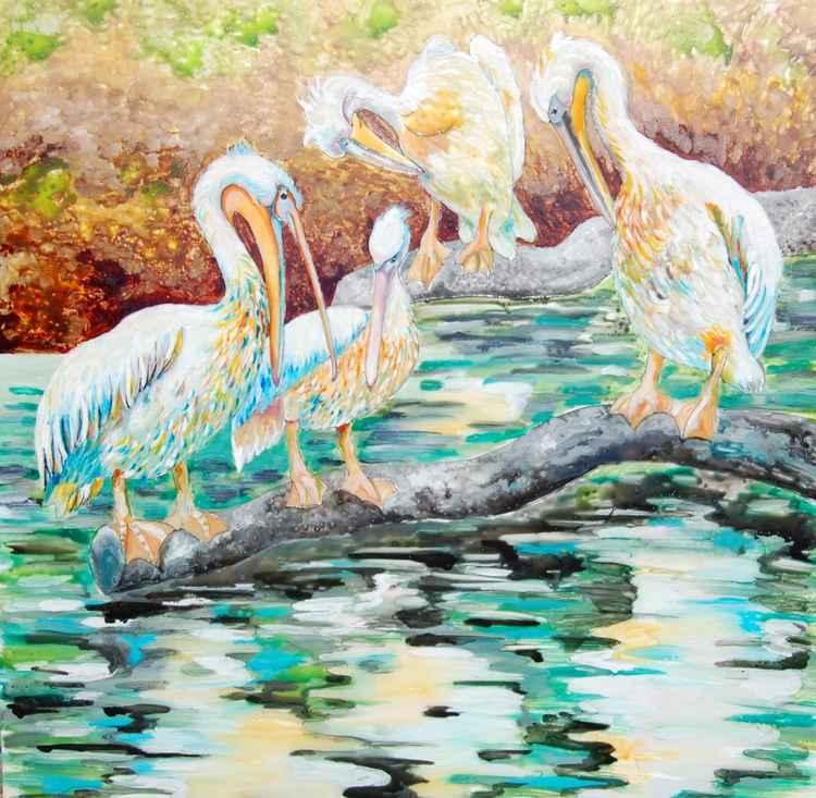 Pelicans -