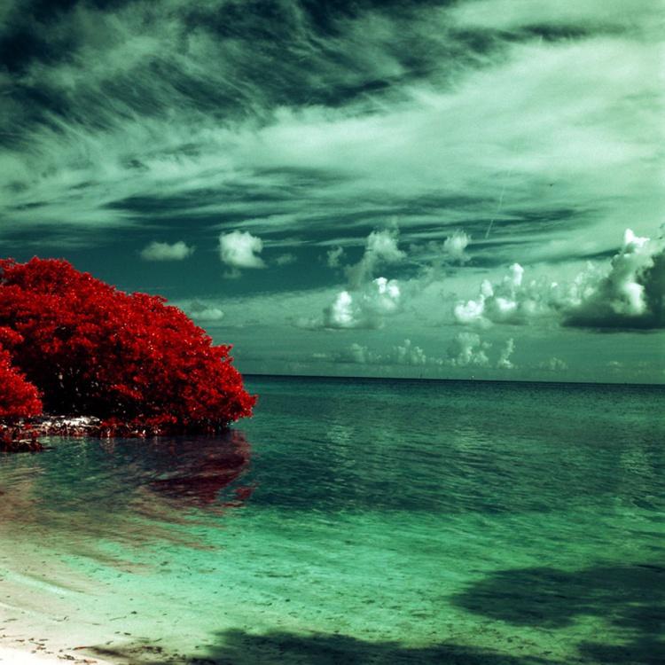 Red Mangroves Reflecting - Image 0