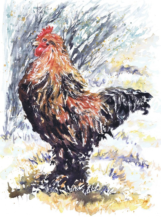 Bantam Cockerel - Image 0