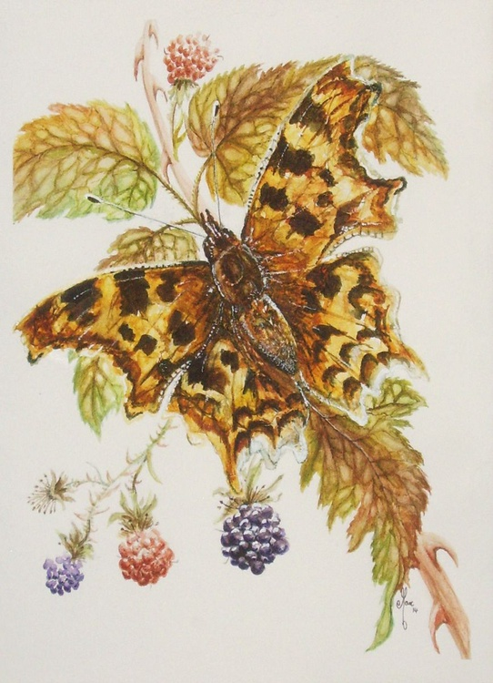 Comma Butterfly - Image 0