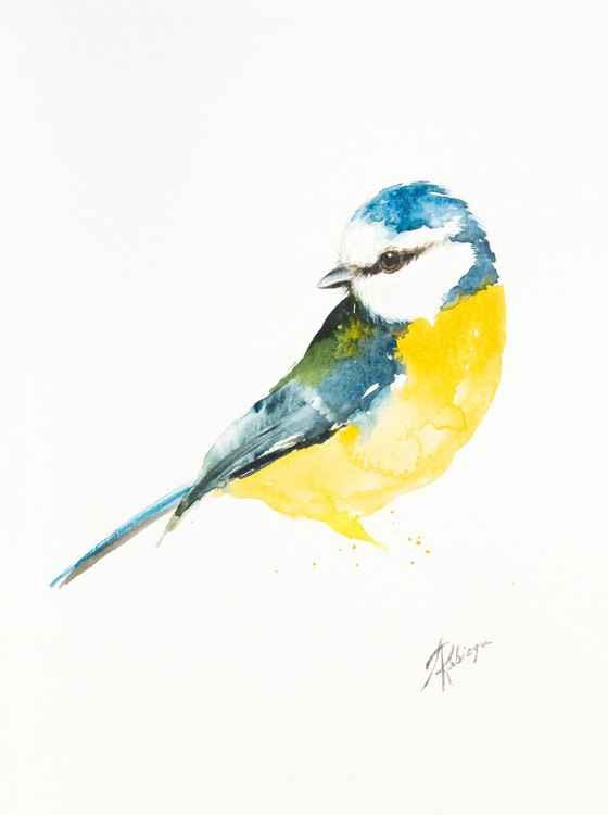 Blue tit (Parus caeruleus) -