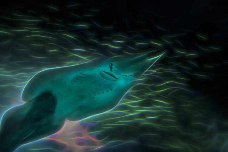 Guitarfish - Image 0