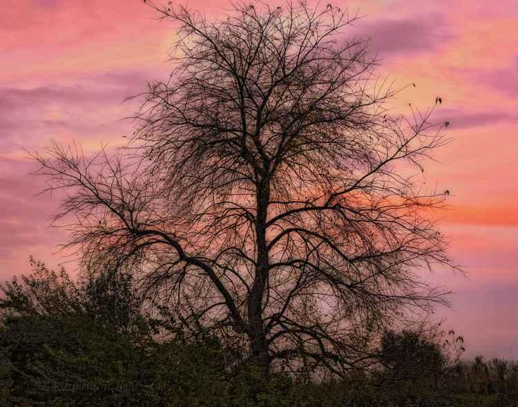 Autumn's Vestige -