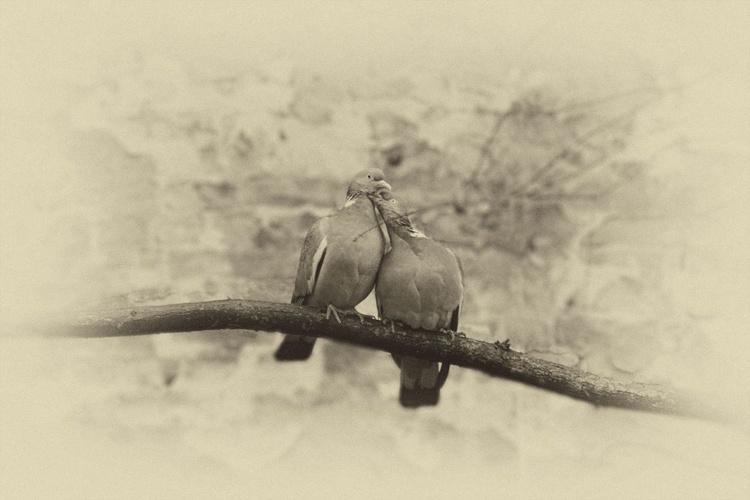 Love Birds 2/3 - Image 0